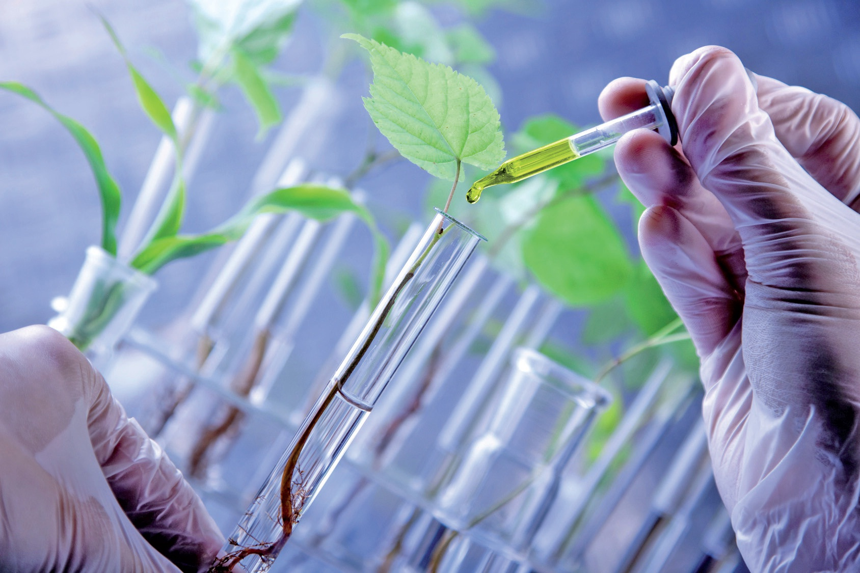 La chimie du végétal, une alternative pertinente basée sur un modèle économique local.
