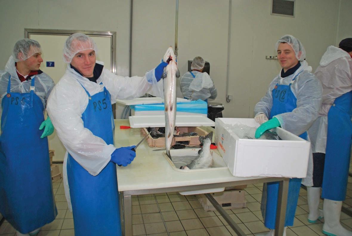 Le filetage du poisson reste une spécialité enseignée au CFPMT, en formation initiale ou continue.