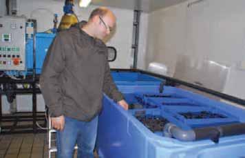 Le mytiliculteur outrelois Fabrice Bréfort a installé son atelier de purification et de conditionnement de moules et de coquillages au coeur de Capécure.