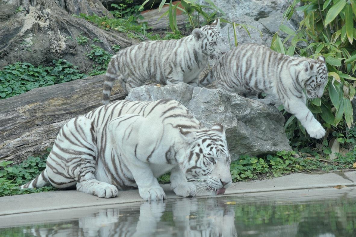 Le zoo de Maubeuge dispose d'un site internet de présentation et d'information.