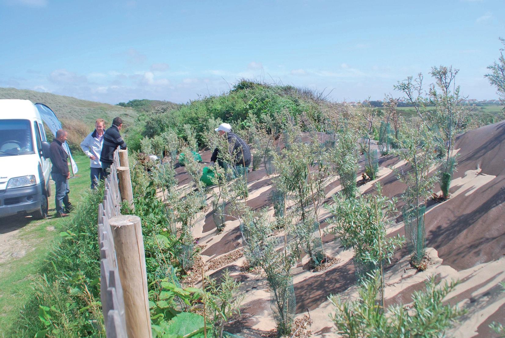 """A l'estuaire de la Slack, Rivages propres s'associe à l'opération """"Grand Site"""" en menant un chantier expérimental pour éliminer une espèce végétale invasive, la renouée du Japon."""