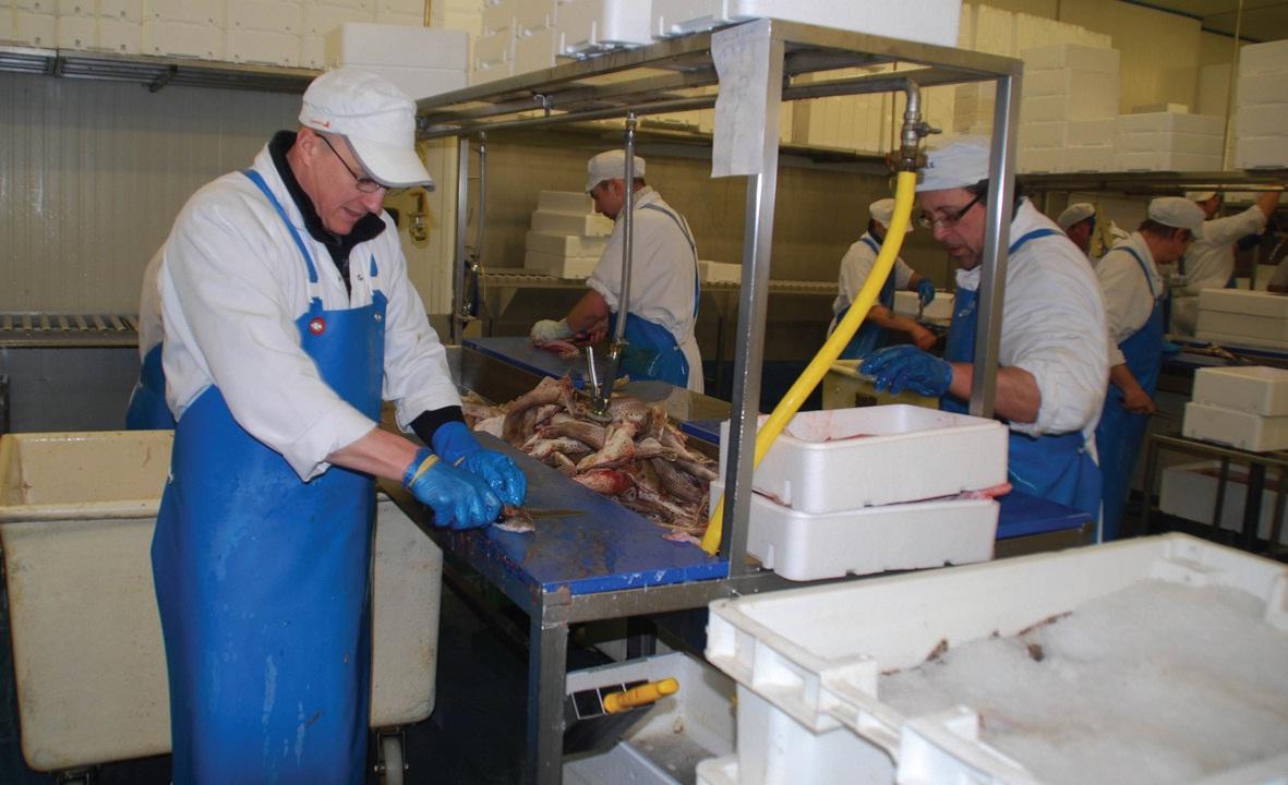 Chez JP Marée, toute la découpe du poisson (ici la roussette) se fait à la main, au petit matin, par une équipe de fileteurs au savoir-faire reconnu.