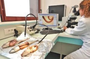 L'ANSES de Boulogne est un laboratoire national de référence dans plusieurs axes de recherche sur le poisson.