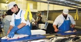 Le secteur de la transformation représente les deux tiers des emplois de la filière halieutique régionale.